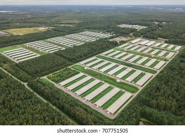 Aerial view of poultry farm among forest
