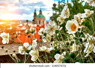 Aerial view of Prague from Prague Castle. Prague, Czech Republic. Beautiful sunset with flowers.