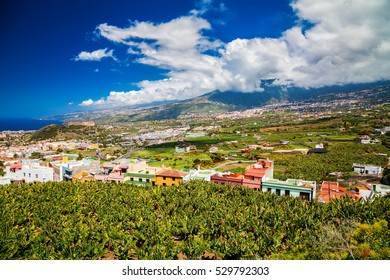 aerial view of Puerto de la Cruz valley with banana plantations and agricultural fields, Tenerife, Canary Islands, Spain