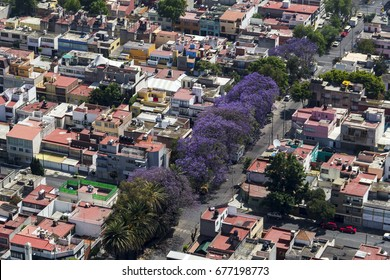aerial view of purple blooming jacaranda trees in living area of Mexico City