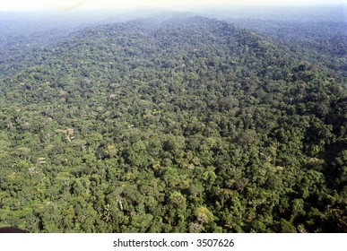 Aerial view of rainforest in Ecuadorian Amazon