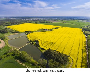 Aerial view of rape field in Poland
