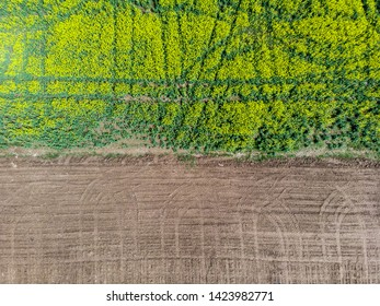 Aerial view of a rapeseed fields bordering an uncultivated land. Border concept.