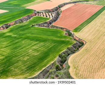 aerial view of recently planted cereal crops, separated by furrows created by soil erosion, horizontal
