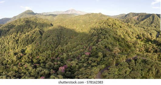 Aerial view of Reventador Volcano in the Ecuadorian Amazon illuminated by the morning sun. Flowering Tibouchina trees blooming in the montane rainforest on the lower slopes.