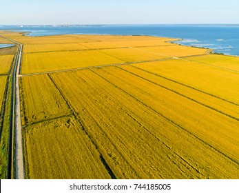 Aerial View of Rice Fields, sunset time