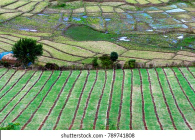 Aerial view of rice paddies farm and vegetables farm in rural Thailand.