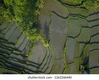 Aerial view of a rice terrace in Bali, Indonesia