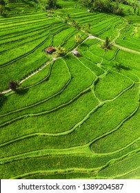 Aerial view of rice terraces. Landscape with drone. Agricultural landscape from the air. Rice terraces in the summer. UNESCO World Heritage - Jatiluwih rise terrace, Bali, Indonesia. Travel - image