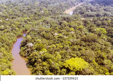 Aerial view of Rio Cononaco in the Ecuadorian Amazon with a huge emergent Ceibo tree in the foreground