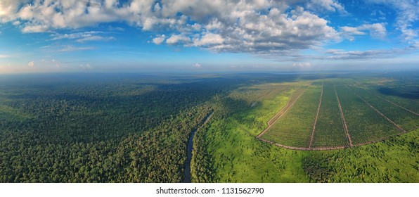 Aerial view of the river and jungle with palms, forest and trees near palm oil tree plantation in East Kalimantan (Borneo) - Kumai, Tanjung Puting national park and Camp Leakey