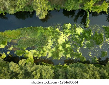 Aerial view of the river, marshland and trees on the riverbanks