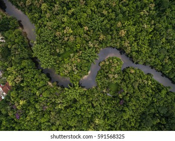 Aerial View of a River in Rainforest, Latin America