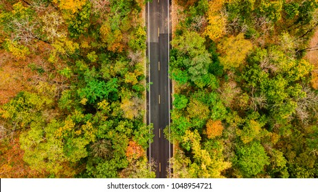 Aerial view of road in autumn forest at sunset. Amazing landscape with rural road, trees with red and orange leaves in day.