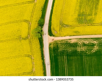 Aerial view of road between green and yellow fields. Agriculture drone shot of canola rapeseed field and green crop field. Ecology agriculture near farm, growing plants on big land.