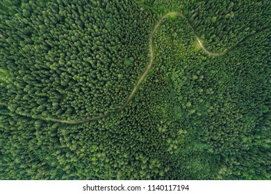 Aerial view of a road in a deep forest