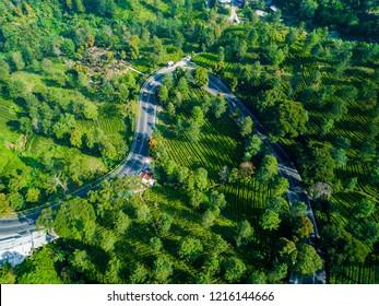 Aerial View of a Road Splits Across the Green Lush Gunung Mas Tea Plantation, Puncak Pass, Bogor, West Java, Indonesia