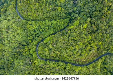 Aerial view the road through the forest.