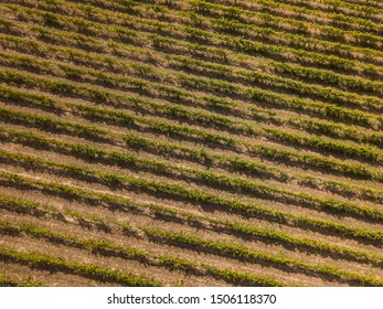 Aerial view, rows of grape vines, vineyard, Portugal