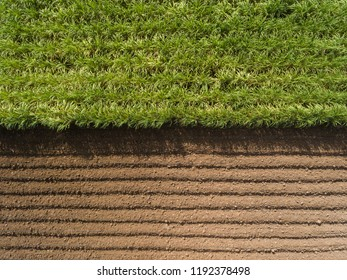 Aerial view ; Rows of soil before planting.Sugar cane farm pattern in a plowed field prepared for  background