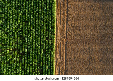 Aerial view ; Rows of soil before planting.Tobacco farm pattern in a plowed field prepared