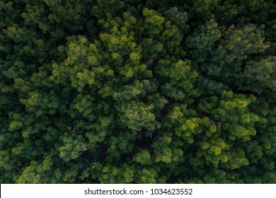 Aerial view of rubber plantations