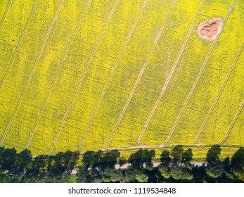 Aerial view of rural landscape of lake district - Mazury, Poland. Field of yellow blooming canola