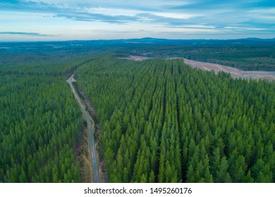 Aerial view of rural road passing through rows of pine trees plantation in Melbourne, Australia