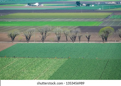 """Aerial view of the Salinas Valley of central California, in Monterey County, an agricultural area dubbed """"the salad bowl"""" of the world, famous for lettuce, strawberries, vegetables and John Steinbeck."""