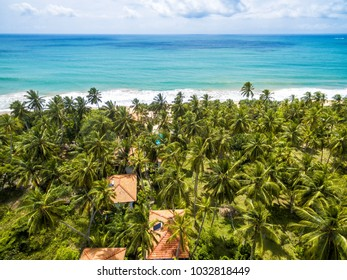 Aerial view of the scenic beach with palms in Sri Lanka. Travel destinations in tropic. Sunny natural beach background. Beautiful beach in a tropical resort. Hotel on the sea beach.