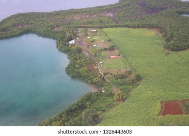 Aerial view at seaside mangroves and sugarcane fields on Guadeloupe island, France