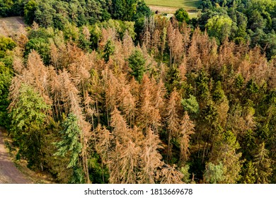 Aerial view of a section of forest dying in the German coniferous forest