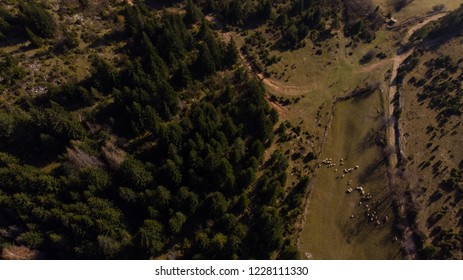 aerial view of sheep and forest near fields and rural road
