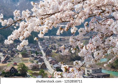Aerial view of Shirakawa-go village, the heritage village with the famous traditional gassho-zukuri farmhouses in the cherry blossom full bloom season, Japan