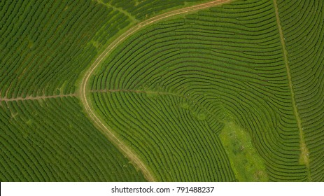 Aerial view shot from drone of green tea plantation, Top view aerial photo from flying drone of a tea plantation at North of Thailand.