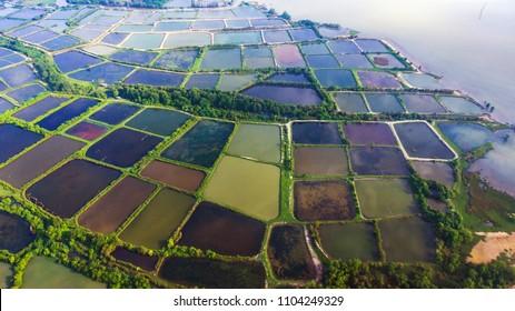 Aerial view  shrimp  farm