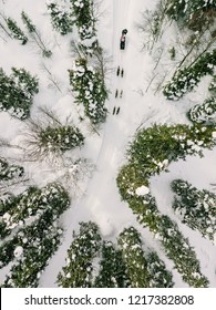 Aerial view of sledding with husky dogs in Lapland Finland. Drone photography from above
