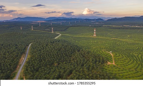 Aerial view to a small road through a palm oil plantation in Malaysia. Kilometers of monoculture landscape near Port Dickson, the coast of Malaysia on the strait of Malacca