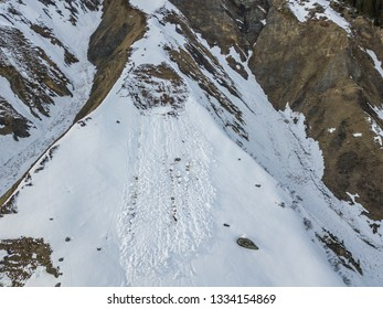 Aerial view of snow avalanche on mountain slope in Swiss alps. Wet snow in spring sliding downhill. Avalanche near Realp, Switzerland.
