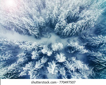 Aerial view of snow covered pine forest and road