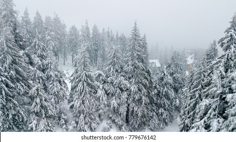 Aerial view of the snow-covered Christmas tree in mountains.