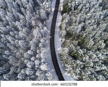 Aerial view of snowy forest with high pines and road. Winter
