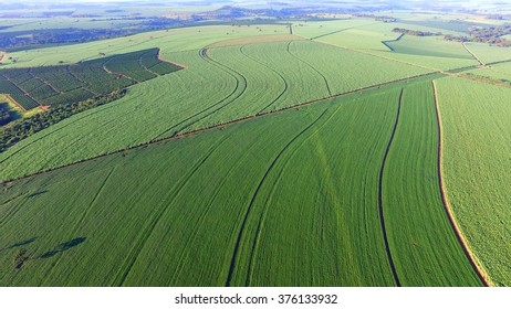 Aerial view soya bean field in Sao Paulo - Brazil
