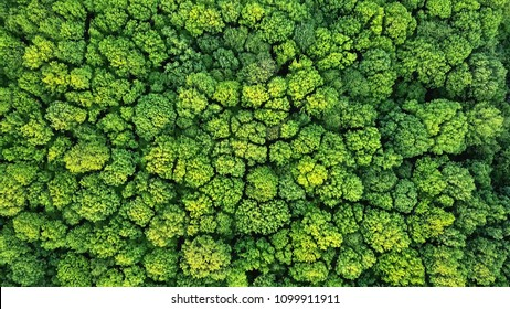 Aerial view spring forest. Natural green background. Photo from the drone
