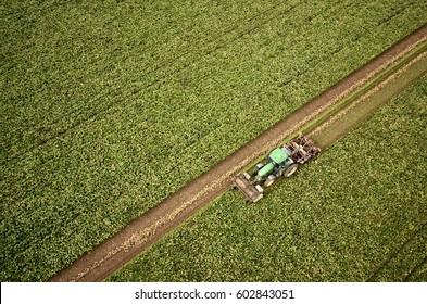 aerial view of sugar beets harvest