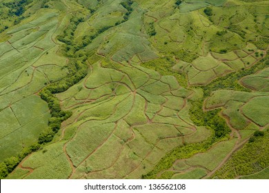 Aerial view of sugar cane field nature pattern