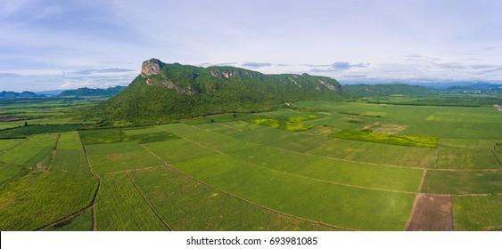 Aerial view of sugar cane field near a mountain, Panorama shot