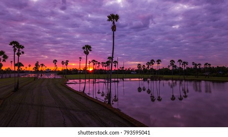 Aerial view of  sugar palm tree  with sunset sky .