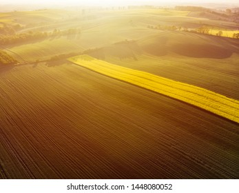 Aerial view of sunrise ofer yellow colza and green grain field