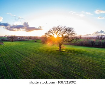 Aerial view at sunset of trees on a plowed field in Italy.